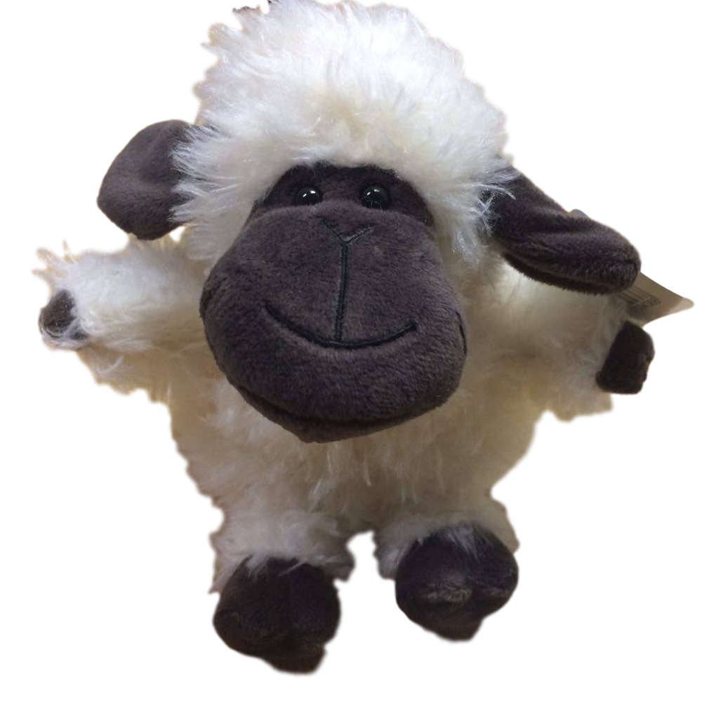 Welsh Black Face Sheep